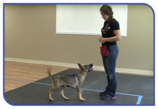 Training at the dog college